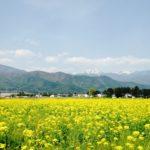 〔募集開始〕花フェス×サイクリング「信州花フェスタ2019 サイクリングツアー」4月29日開催!
